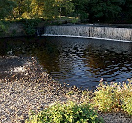Water Features and Woodland